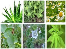 230 plantas medicinales y sus usos