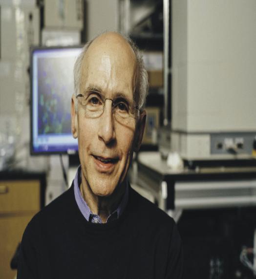 Descubierta una proteína que rejuvenece los músculos del cerebro