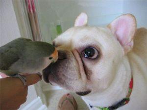perro dandole beso a un loro soy linda.net